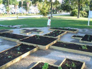 Garden-First Plants 004